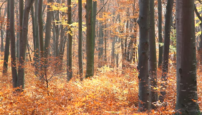 Fall into the forest. The camera is moving up exposing the colors of autumn