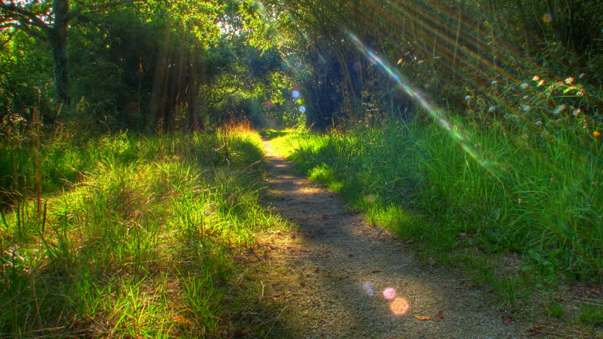 Sunset beams through trees on forest path, HD motorized time lapse clip, high dynamic range imaging
