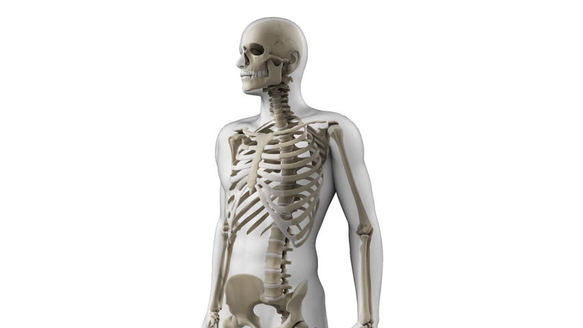 digital 3d animation of a human skeleton stock footage video, Skeleton