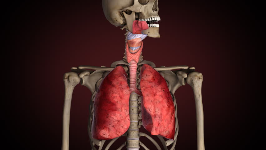 Lungs of smoker, turns from healthy to sick
