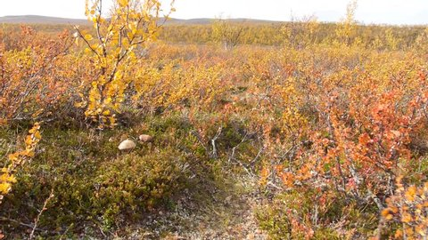 dolly-shot of ground 