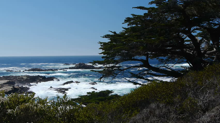 Monterey Cypress | Shutterstock HD Video #5136107