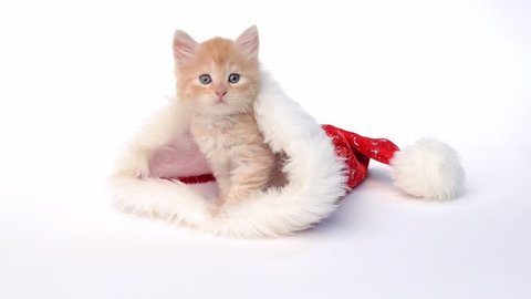 Little red kitten in a Christmas hat