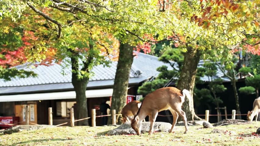 Nara Is A Major Tourism Destination Editorial Stock Image - Image ...