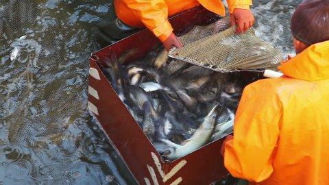 Nikolaev, Ukraine - October 12: fishing at the fish factory 12 October 2013 - 1