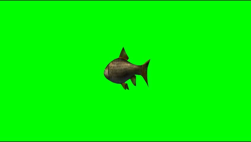 Fish swim animal green screen video Footage #5273477