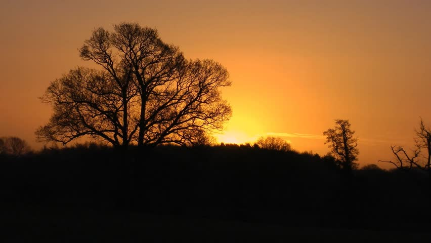 English Oak Tree on a rural landscape at sunrise on an autumn morning