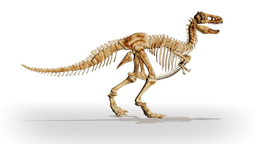 Header of Dino