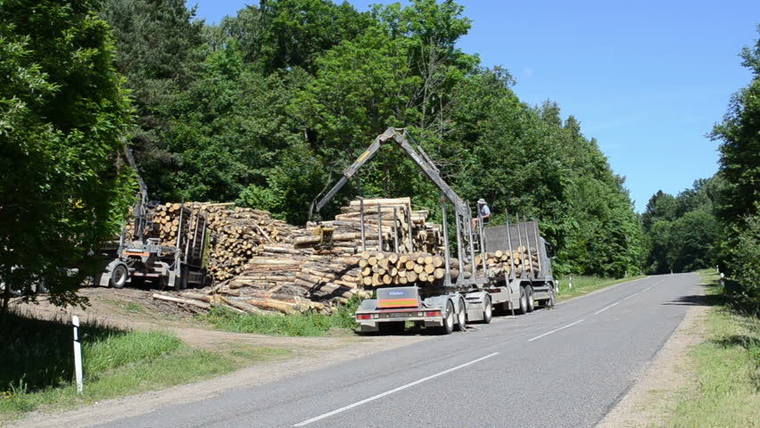 large piles of cut logs loaded near road to forest workers manage large clippers brings logs and loading truck trailer circa June in Moletai, Lithuania.