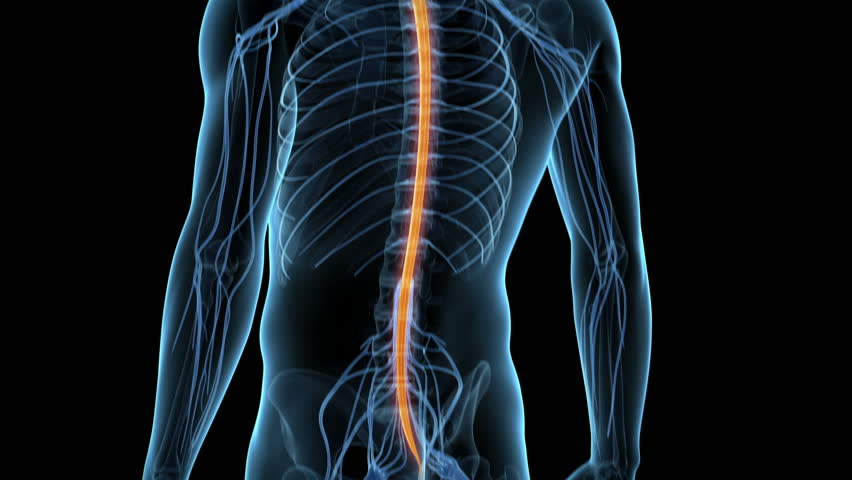Medical animation - spinal cord | stock clip #5362787 | Stock Clips
