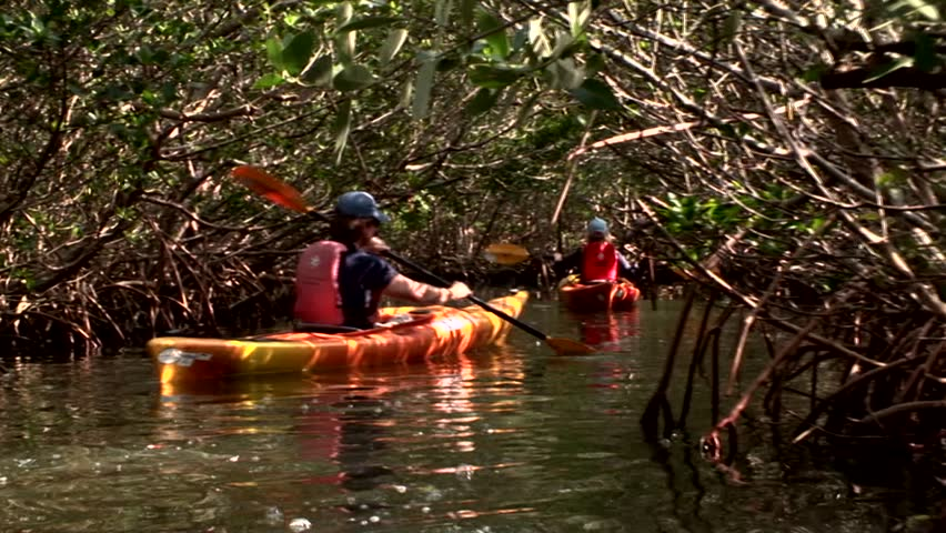 Kayaking through a mangrove tunnel in Florida