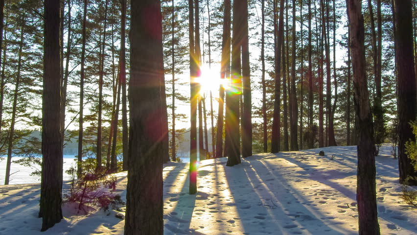 winter forest and sun, 4K timelapse | Shutterstock Video #5388413