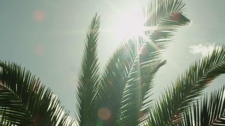 Lens Flare through Palm Tree Leaves at Sunset Time.Shot on RED Digital Cinema Camera in 4K(ultra-high definition (UHD)),so you can easily crop, rotate and zoom, without losing quality!