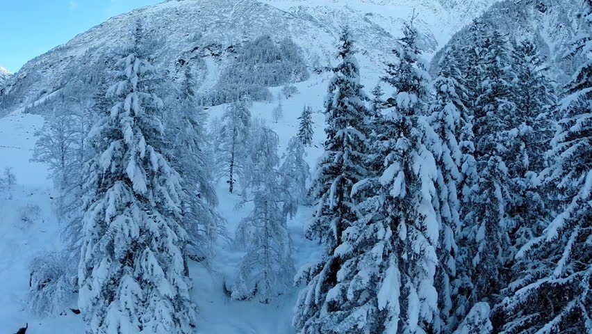 snow winter season. trees forest woods. beautiful nature. fly over. aerial view. #5594366