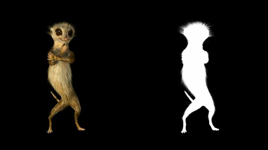Dancing meerkat. Animation looping dance 3d model meerkat with a matte channel