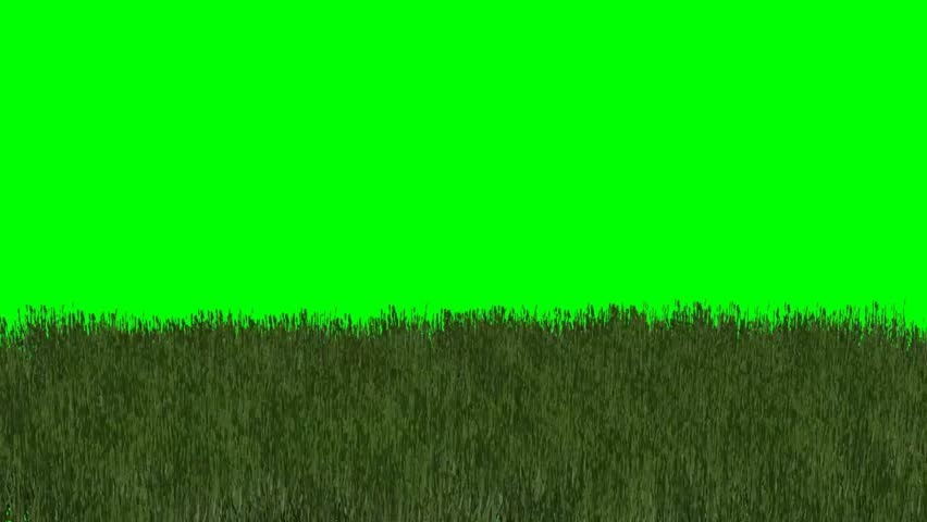 grass with flowers in the wind - green screen