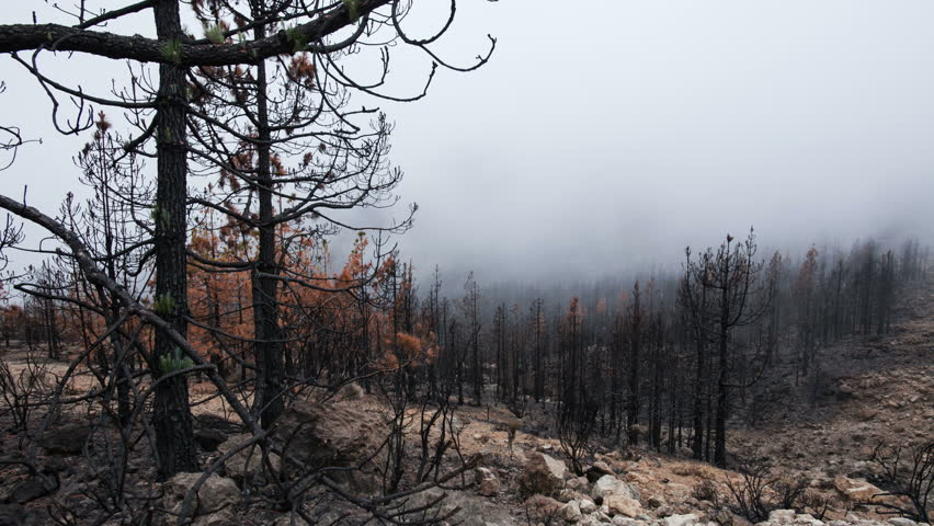Time-lapse of a burned forest with low clouds passing by