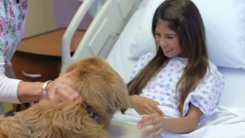 Handler brings therapy dog into girl patient's room and he jumps onto bed to be stroked.