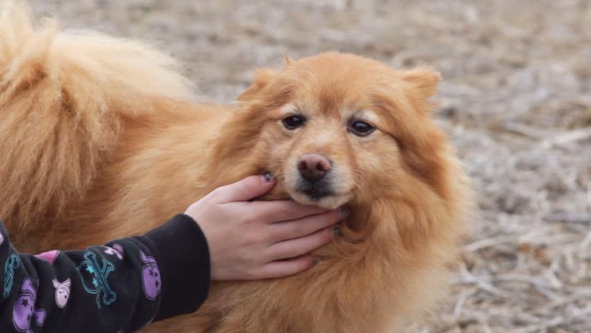 Cara Mengelus Anjing Secara Benar dan Tepat