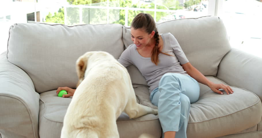 Laughing woman playing with her labrador dog on the couch at home in the living room