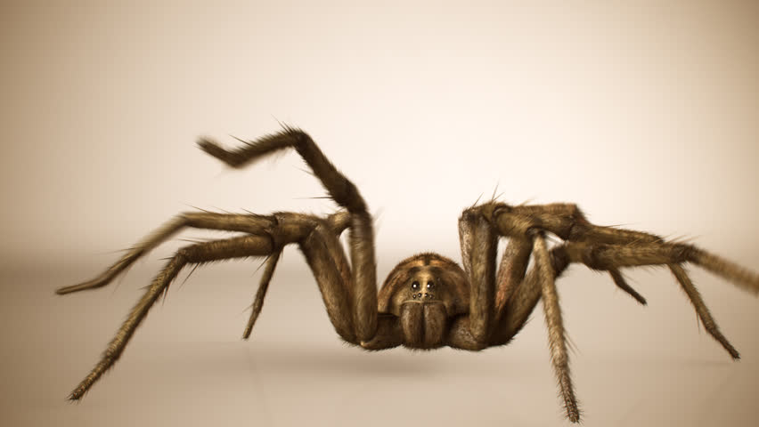 Front view of big venomous spider crawling across bright surface. #6008384