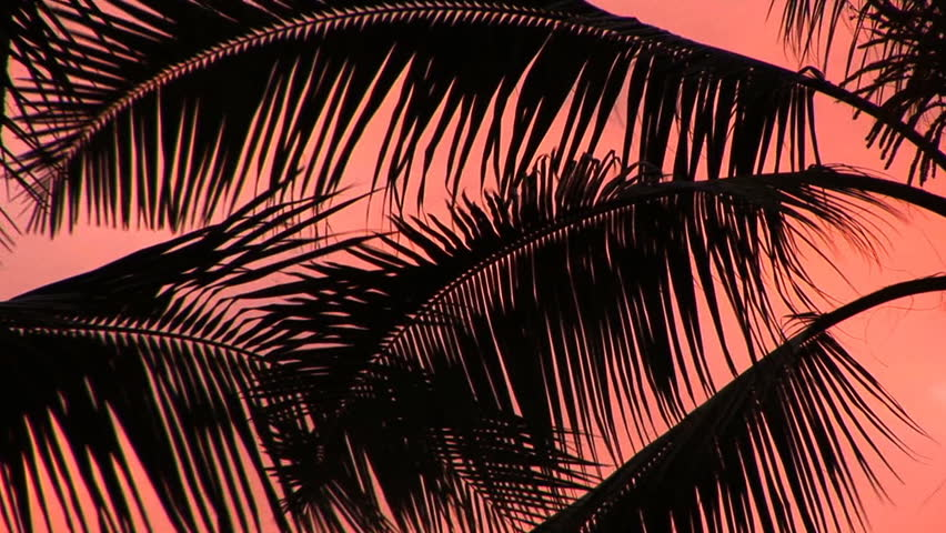 HD: Palm Fronds Backlit Palm Fronds against a coral pink sky, on the Big Island of Hawaii