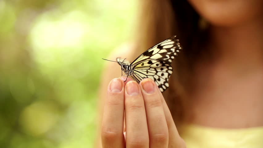 Girl Has A Butterfly In Her Hand Stock Footage Video -4917