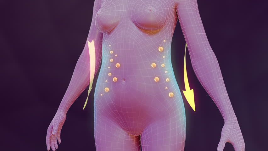 Body slimming animation. Three high quality animation showing the process of weight loss and vanishing of body fat. Best for you commercial movie, video presentation and other production. | Shutterstock HD Video #6269216