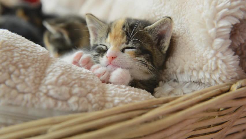猫用システムトイレおすすめ人気ランキングTOP3・口コミ