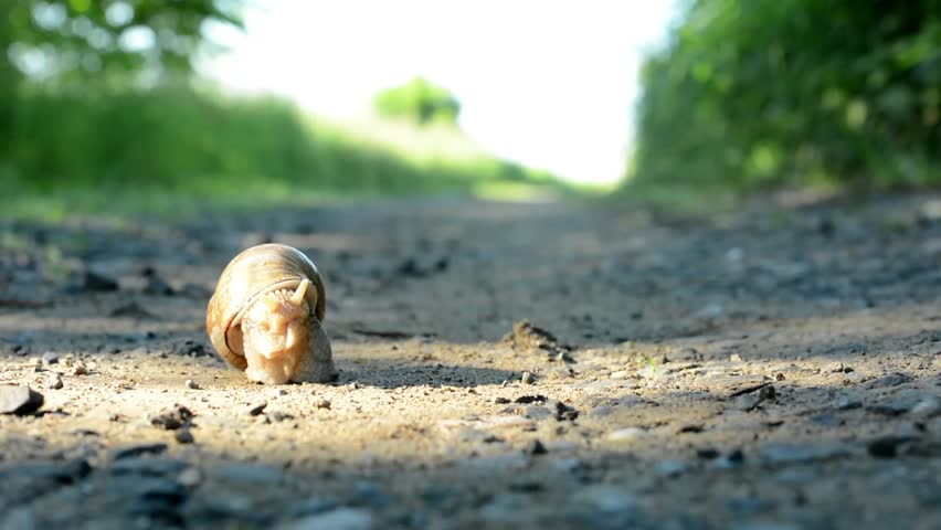Snail crawls on the road (in nature) | Shutterstock HD Video #6450047