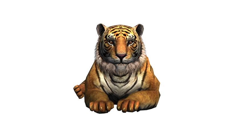 Tiger lying down to rest,wildlife animals habitat.stripes pattern. cg_02070