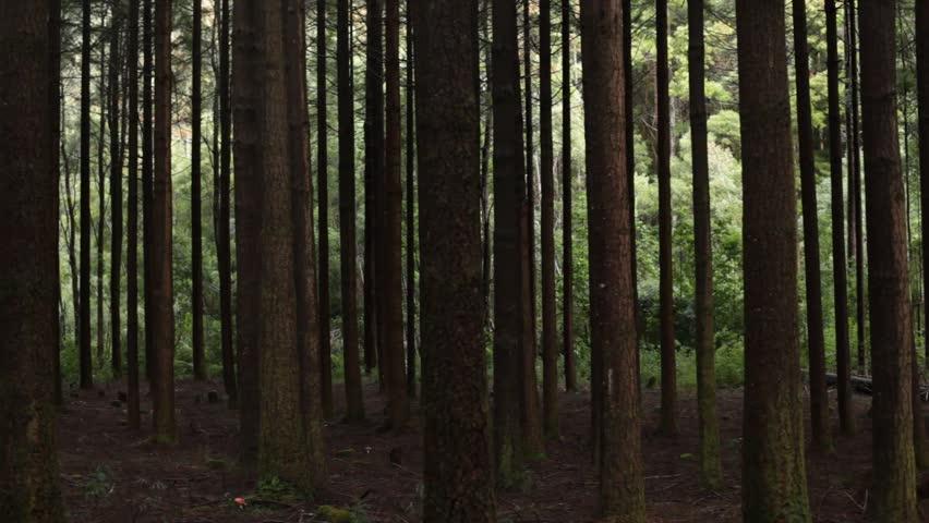 Forest trees, slider | Shutterstock HD Video #6506507