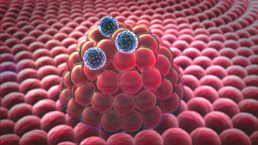 Group Of Living Cells Under Microscope, Field Of Fat Cells ...