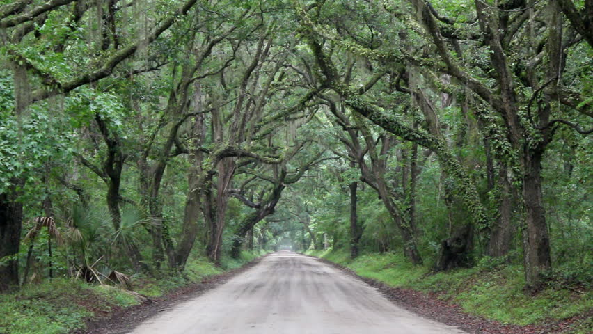A Beautifully Eerie Dirt Road With Tree Canopy Covered In Spanish Moss On A Rainy Day On Botany Bay Plantation On Edisto Island SC Stock Footage Video ... : canopy spanish - memphite.com