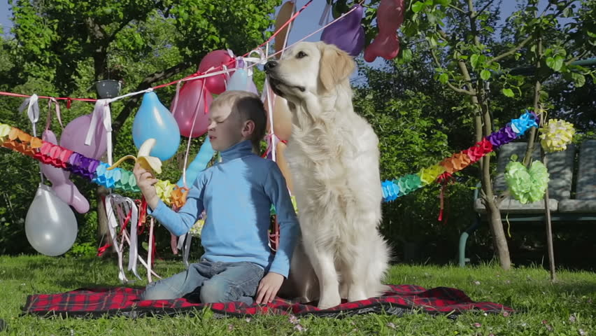 Boy, dog and banana Boy feeds beautiful young golden retriever with banana. Background has lots of balloons and that means that they are having a party (Birthday or summer celebration)