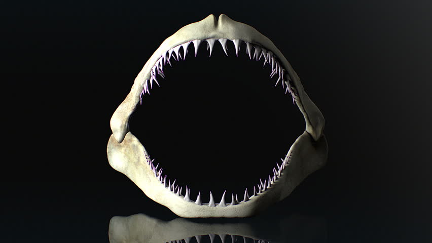 Megalodon Jaw And White Shark Jaw Compared. Stock Footage Video 6694634 | Shutterstock