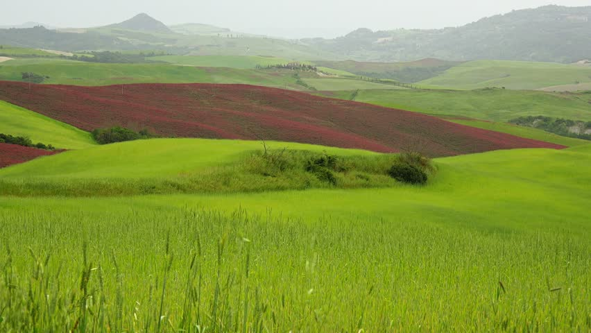 Summer nature landscape, green hills of Tuscany, Italy. #6730867