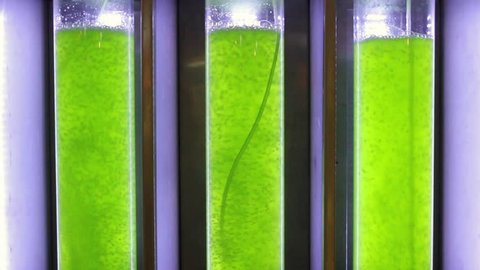 Photobioreactor in Algae fuel biofuel industry. Algae fuel or algal biofuel is an alternative to fossil fuel that uses algae as its source of natural deposits.