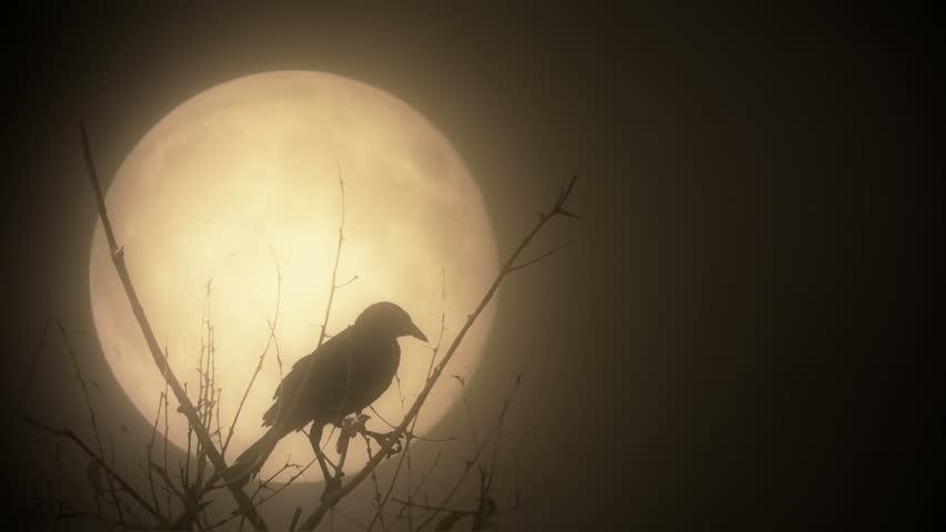 Raven illuminated by a blood moon | Shutterstock HD Video #7223887