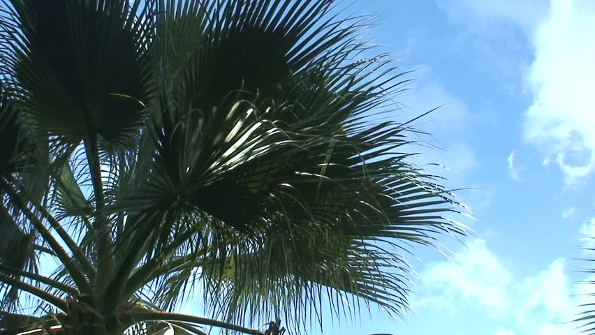 branch and palm trees essay Date palm phoenix dactylifera l is known as tree of life plays an imperative role in the life an overview of the date palm environmental sciences essay print.