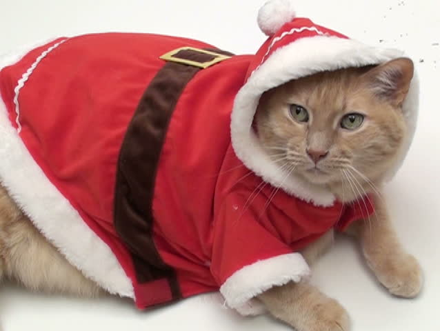 Cat in Santa Outfit V3 Stock Footage Video (100% Royalty-free ...