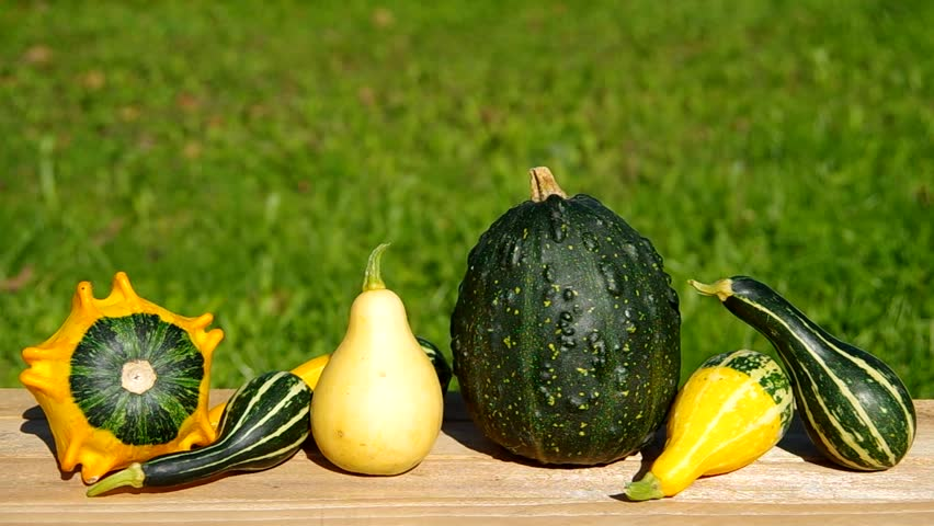 Ornamental pumpkins on wooden table and green background