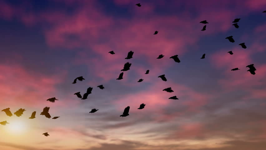 A large flock of pigeons flies at dusk.  They cross the screen from the lower left to upper right. Computer generated and seamlessly loopable. HD 1080p
