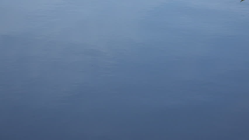 Calm Water Texture On Save The Smooth Surface Of The Stock Footage Video 100 Royaltyfree