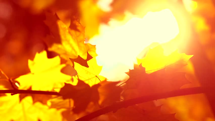 Image result for autumn leaves in fire