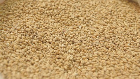 Grinding of malt for producing beer