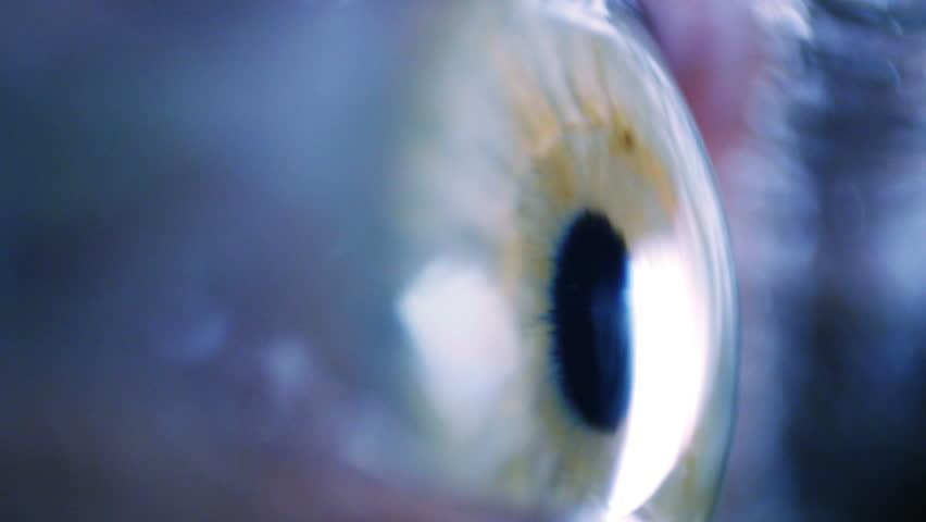 Eye iris and pupil macro. Eyeball move around. Extreme close up. Shallow depth of field