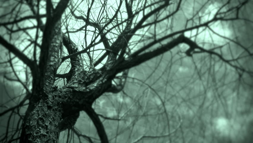Dead Tree Rustles in the Wind