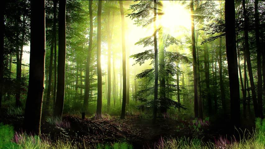 Dark Forest (Video Background) - YouTube