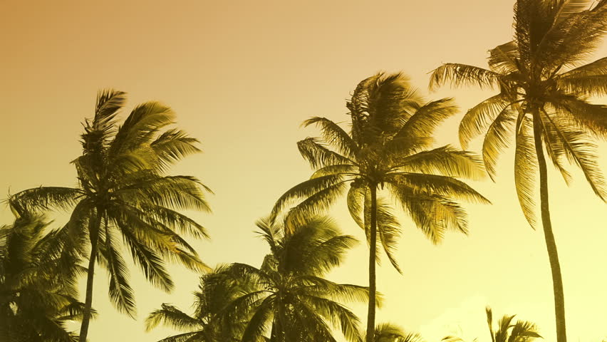Vibrant colors moving with the wind palm trees summertime beach sunset.